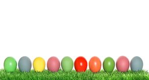 Easter eggs in green grass Spring holidays banner. Easter eggs in green grass onwhite background. Spring holidays banner royalty free stock image