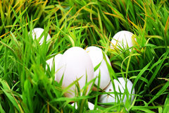 Easter eggs on green grass. Spring holidays concept Royalty Free Stock Photography
