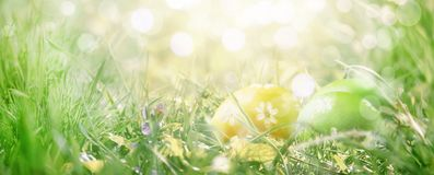 Easter eggs in green grass, spring nature border background with place for text, banner. Easter eggs in green grass, spring nature border background with  place royalty free stock photography
