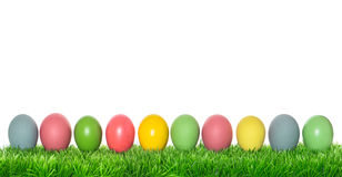 Easter eggs in green grass on white background Royalty Free Stock Photography