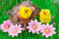 Easter Eggs Green Grass Yellow Chicks Royalty Free Stock Photos