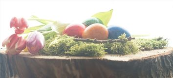 Easter eggs and green moos at wooden block. Photo design Stock Images