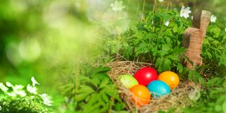 Easter eggs in green nature royalty free stock images