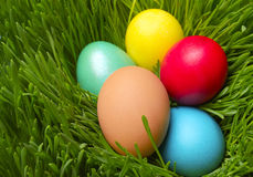 Easter eggs on green spring grass royalty free stock photography