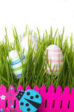 Easter eggs and green wheat plant Royalty Free Stock Image