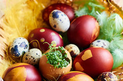 Easter eggs with greenery. Brown Easter decorative eggs with greenery Stock Image