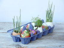 Easter eggs and greens in eggshells Stock Images