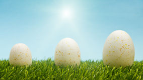 Easter Eggs Growth Stock Photography