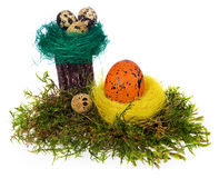 Easter eggs hand painted multicolored in bird nest, forest moss, Stock Photography