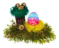 Easter eggs hand painted multicolored in bird nest, forest moss, Stock Image
