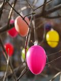 Easter eggs hanging on  branches Royalty Free Stock Photography