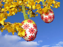Easter eggs, hanging on forsythia branch Royalty Free Stock Photos