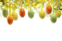 Easter. Eggs hanging on forsythia branches stock photo