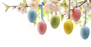 Easter. Eggs hanging on plum branch stock images