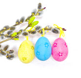 Easter eggs hanging on ribbons and pussy-willow Royalty Free Stock Image