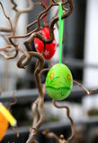 Easter eggs hanging on the tree Stock Photography
