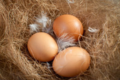 Easter eggs on hay.  Royalty Free Stock Photo