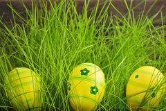 Easter eggs hidden in green grass Royalty Free Stock Images