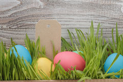 Easter eggs hiden in grass border composition Stock Image