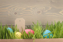 Easter eggs hiden in grass border composition Stock Images