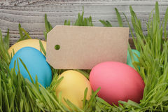 Easter eggs hiden in grass border composition Royalty Free Stock Photography