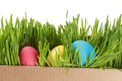 Easter eggs hiden in grass Stock Images
