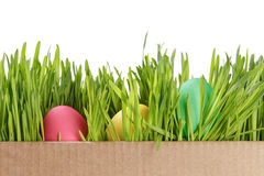 Easter eggs hiden in grass Royalty Free Stock Images