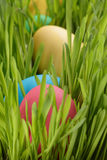 Easter eggs hiden in grass Stock Images