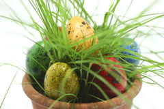 Easter eggs hiding in grass Royalty Free Stock Photos