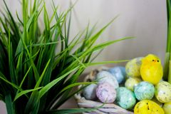 Easter eggs hiding in the grass with daffodil on wood background. stock image