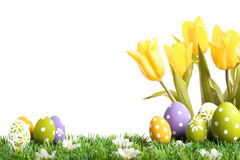 Easter eggs hiding in the grass with four tulips. Isolated on white Stock Photo