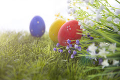 Easter eggs hiding in the grass Royalty Free Stock Photos