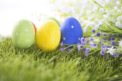 Easter eggs hiding in the grass Royalty Free Stock Photography