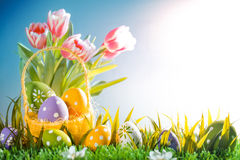 Easter eggs hiding in the grass with tulips. Studio shot Royalty Free Stock Photos