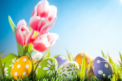 Easter eggs hiding in the grass with tulips. Studio shot Stock Images