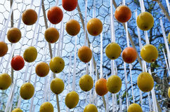 Easter eggs hung outdoors Stock Image
