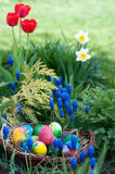 Easter eggs hunt Royalty Free Stock Photo
