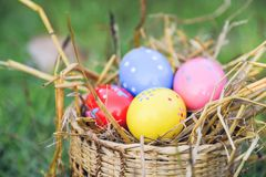 Easter eggs hunt on green grass outdoor royalty free stock image