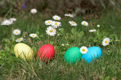 Easter eggs ina garden Royalty Free Stock Photo