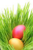 Easter eggs. Inside green grass Royalty Free Stock Images