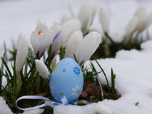 Easter eggs laying snow flowers Royalty Free Stock Photos