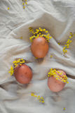 Easter eggs like girls in mimosa wreathes Royalty Free Stock Photo
