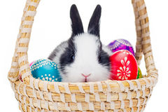 Easter Eggs With Little Bunny Stock Photography