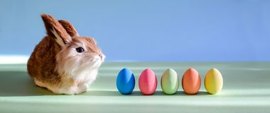 Easter eggs and little cute rabbit stock images