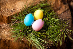 Easter eggs lying in nest of fir tree Royalty Free Stock Photography