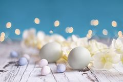 Easter Eggs malt candy eggs and Flowers Background. Natural colored Easter eggs, malt candy covered chocolate eggs, and flower blossoms over a rustic white wood royalty free stock images