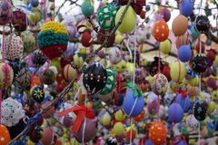 Easter eggs. Many easter eggs on a tree stock photo