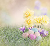 Easter Eggs on Meadow with daffodil flower Stock Images