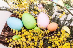 Easter Eggs And Mimosas Stock Images