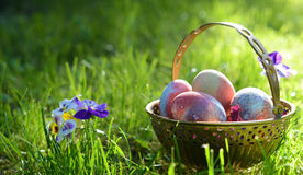 Easter eggs on the morning grass Stock Photo